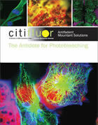 Citifluor Catalog